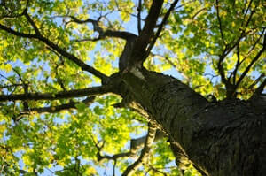 Adopt a tree and make a difference to the environment