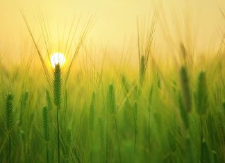 IoT - A way towards smart farming