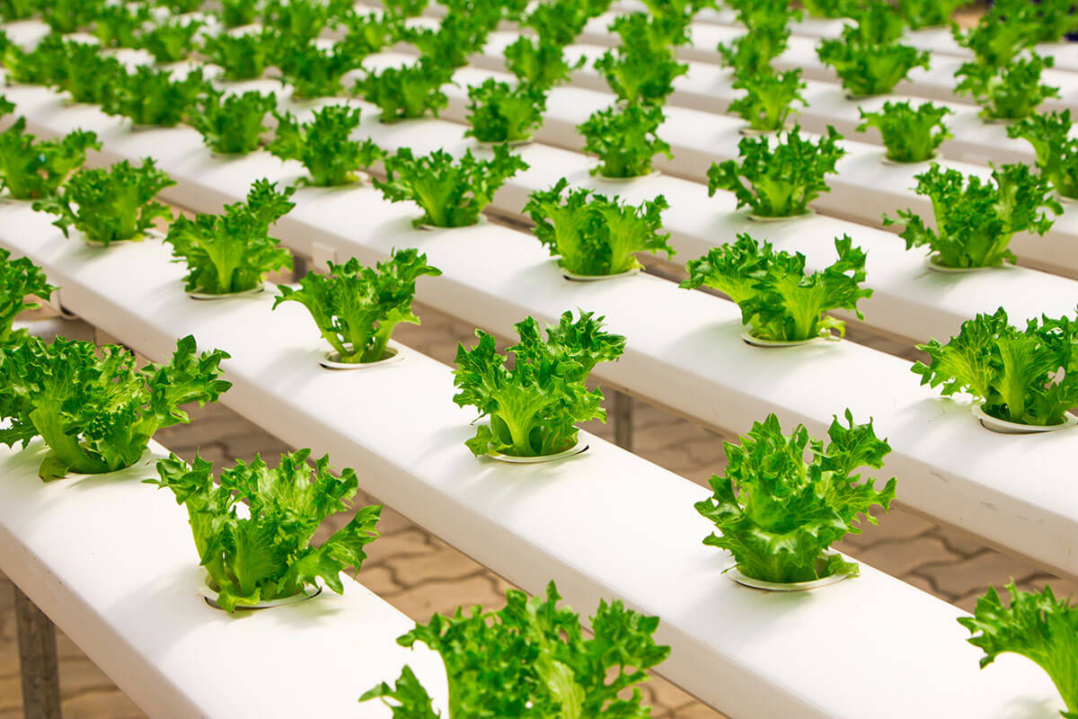How Technology Upgrade Can Leverage Future Food?