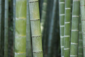 How Is Bamboo A Sustainable Solution For Construction?