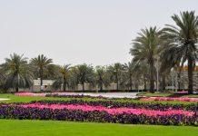 Dubai Landscaping