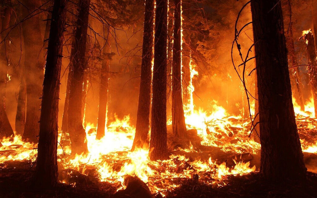 Forest Wildfire - Downfall Of Ecosystem