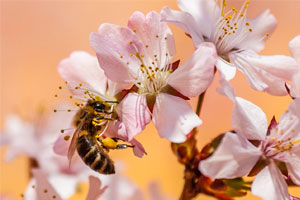 Wildlife Gardening To Nurture Native Plants And Insects